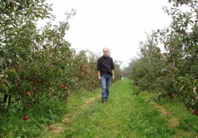 Wandelen tussen de fruitbomen van Hellebos